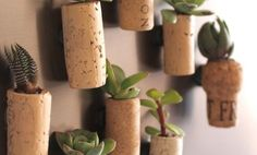 Like, every part of the bottle. | 32 Reasons Succulents Are The Best Plants Ever