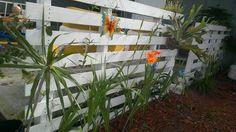 Valla para jardin con plantas