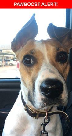 Please spread the word! Shiloh was last seen in Dallas, TX 75231.  Description: Friendly, hyper and fast   Nearest Address: Forest Ln Station, Dallas, TX, United States