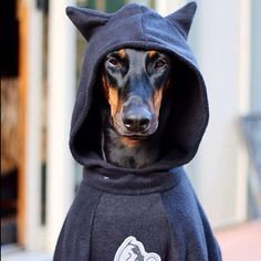12 INSANELY Easy Way for a Happy Doberman