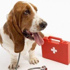 """""""Botiquín básico en casa Debes tener siempre lleno el botiquín de casa para los primeros auxilios para tu perro. Este debe contener: Medicamentos recetados por el veterinario que solo le administraremos si nos lo indica el profesional. Jeringas estériles, gasas, esparadrapo y algodón. Agua oxigenada adecuada para nuestro perro. Termómetro rectal canino. Pinzas para extraer posibles cristales, espinas o incluso garrapatas"""