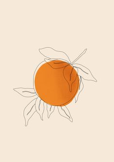 Orange by Sara Gisabella Designs botanical line art tangerine minimalist wallart print design botanical illustration fruit illustration summer vibes - Fruit Illustration, Illustration Vector, Simple Illustration, Vintage Botanical Illustration, Illustrations Posters, Illustrations Vintage, Illustration Animals, Design Illustrations, Illustration Fashion