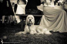 www.darshanphotography.com Vancouver Island, Fashion Shoot, Wedding Photography, River, Weddings, Pets, Wedding, Wedding Photos, Wedding Pictures