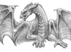 Excellent Pencil Drawings Of Dragon