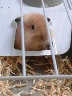 My Rabbit Bunnie