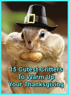 15 Cutest Critters Sure To Warm Up Your Thanksgiving  ... from PetsLady.com ... The FUN site for Animal Lovers