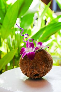 Embrace a tropical wedding location by topping cocktails in coconuts with Dendrobium orchids.