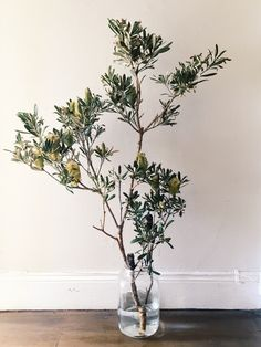 Australian native Coast Banksia branch in vase // Australian Native Garden, Australian Native Flowers, Australian Plants, Modern Flower Arrangements, Vase Arrangements, Pretty Flowers, Colorful Flowers, Christmas Wedding Flowers, Vase With Branches