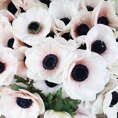 Anemones in June... Our favoritePC: @thisisglamorous #loveandlace #summerlove