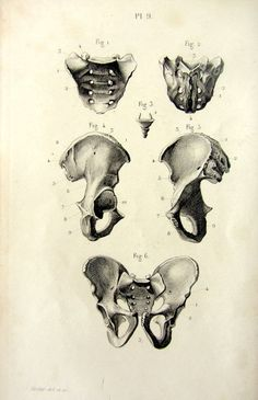 1846 Curiuos vintage BONES anatomy print of by LyraNebulaPrints, $23.95