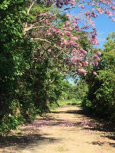 Camino al Terrenito Nacajuca Tabasco