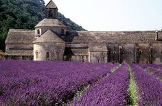 - Cabin, Mansions, House Styles, Building, Travel, Flowers, Home Decor, Medicinal Plants, Lavender