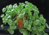 all about plant: description, images, advices, plant care instructions, ...