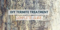 Want to kill termites? Here are 8 best ways to kill and get rid of termites effectively. Visit to learn how to kill termites naturally and fast now. Drywood Termites, Termite Control, Pest Control, Diy Termite Treatment, Termite Inspection, Citrus Oil, Garden Guide, Natural Home Remedies