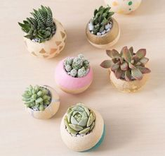 @curiouscountry posted to Instagram: Look at this cute idea to make mini succulent planters!  These are simply made by using Bell Cups (these are bleached, but you could use natural as well), painting them how you like, and then planting your succulents inside.  Easy and sweet! Photo: @succulentsandsunshine  #succulents #succulentgarden #suckerforsucculents #succulentjunkie #succulentlover #succulenthoarder #succulents_only #succulentplants #succulentobsession #bellcups #diysucculents #diycrafts