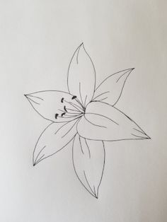 Lily Step 9