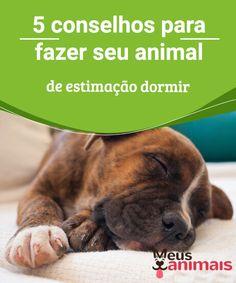 5 conselhos para fazer seu animal de estimação dormir   Você tem #dificuldade para fazer seu animal de estimação #dormir? Conheça algumas dicas que podem ser de grande #ajuda nesta tarefa! #Conselhos