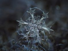 Micro-photography of individual snowflakes by Alexey Kljatov