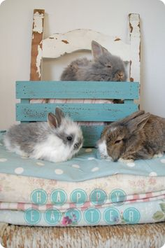 Trio of pretty bunnies lounge in comfort!