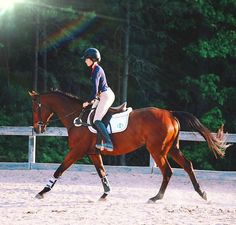 SOLD!This is Can't Stop The Feeling. He is a 16.2HH Hanoverian gelding. He is a jumping, 4th level dressage, eventing, cross country, and primary prilly. He is amazing but he needs soft hands and an owner that can spend lots of time with him because he is such a love bug. Good farrier/bath/vet/trailer! Worth your while! $15,000.~Joanna.