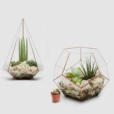 Pflanzen zwischen Kunst und Natur