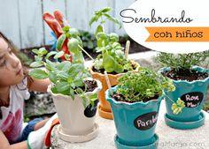 Como sembrar hierbas para las comidas en casa
