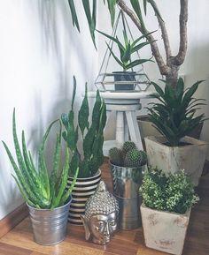 my little green corner #green #flowers #suculent #cactus #cacti #aloevera #dracena #ikea #buddha #triangle #pyramid #silver #details #home #homeinspo #homedecor #interior #interiordesign #design