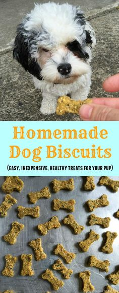 These easy to make dog biscuits are very inexpensive and healthy for your little pup.