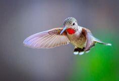 Hover by John Feher Small Birds, Little Birds, Animals Beautiful, Cute Animals, Power Animal, Bird Pictures, Pretty Birds, Wild Birds, Bird Watching