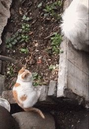 First hit and then in the bushes!