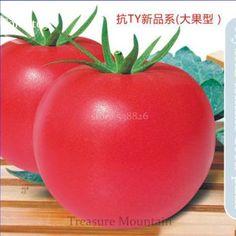 Seeds Online - Garden Plants - Seeds Vegetable Flower Fruit Tree by jaipurkalakendra