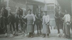 Brewery Co. Hull England, England Uk, Kingston Upon Hull, East Yorkshire, Old Photographs, Cumbria, Past Life, Vintage Photos, Horses