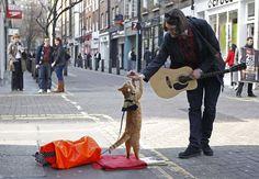 Bob the street cat, le chat le plus mignon de Londres #london #cat