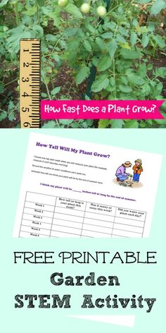 Garden ideas for kids | outdoor math activity | plants and measurement for the classroom
