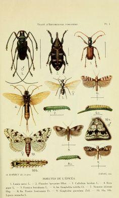 Traité d'entomologie forestière à l'usage des forestiers, - Biodiversity Heritage Library