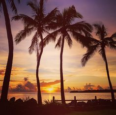 """""""Fiji sunsets & palm trees = perfect paradise! Just add cocktails for a sublime Fiji moment!"""" - IG'er jewelszee"""