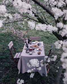 From last weekend's magical breakfast under a blooming plum tree in the countrysideHappy sunday guys! #ourfoodstories_countryside