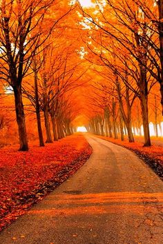 """""""Beauty is everywhere: Autumn tree tunnel"""" Beautiful World, Beautiful Places, Beautiful Pictures, Beautiful Roads, Tree Tunnel, Autumn Scenes, Fall Pictures, Beautiful Landscapes, Paths"""