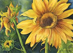 Sunflowers 22x30 Giclee print by PenfoldArtGallery on Etsy, $80.00~this is my Sister~in~laws work!! She is so talented!! 'Nettez