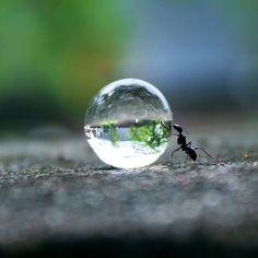An ant appears to be trying to roll a perfectly spherical droplet of water back to its nest. Photographer Rakesh Rocky from Warangal, India