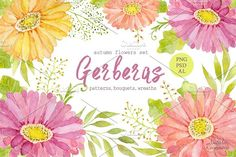 Watercolor set of gerbera flowers by Natali_art on @creativemarket