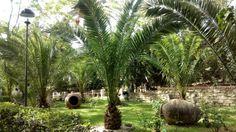 Jardines zona del Olivar