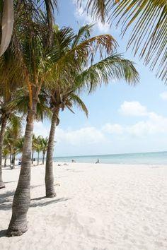 the beach at Crandon Park. South Beach Miami, South Florida, Key Biscayne Miami, Crandon Park, Concession Stands, Picnic Area, Florida Travel, Grills, Places Around The World