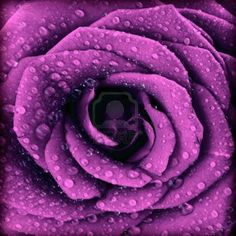 purple in nature - Google Search