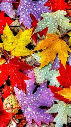 Every leaf is a flower Wallpaper Autumn Nature Wallpapers) – Funny Pictures Crazy Autumn Leaves Wallpaper, Fall Pictures, Of Wallpaper, Nature Wallpaper, Autumn Desktop Wallpaper, Cute Fall Wallpaper, Halloween Wallpaper Iphone, Retina Wallpaper, Computer Wallpaper