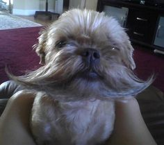 Dog With An Epic Beard  - Say hello to the newest meme!