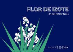 Feliz día de Independencia | miformulacreativa El Salvador Flag, Mexican Pattern, Central America, South America, Watercolor Paintings, Cool Pictures, Culture, Memes, Drawings