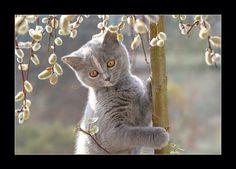 Sweet Grey Kitten.. Love <3