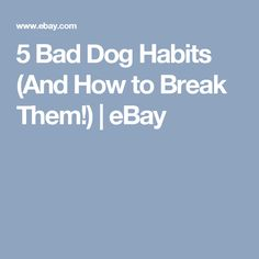 5 Bad Dog Habits (And How to Break Them!) | eBay