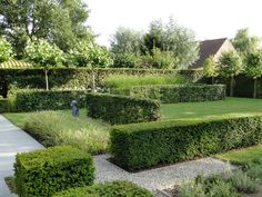 Thomas Leplat has designed a contemporary garden which relies on a few trees, contrasting hedges and grasses for structure.